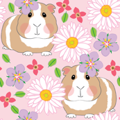 guinea-pigs-with-white-gerber-daisies-on-pink