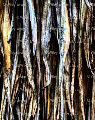 palm phrons-ed