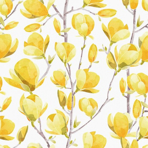 Yellow Magnolia Spring Bloom 2 // white background