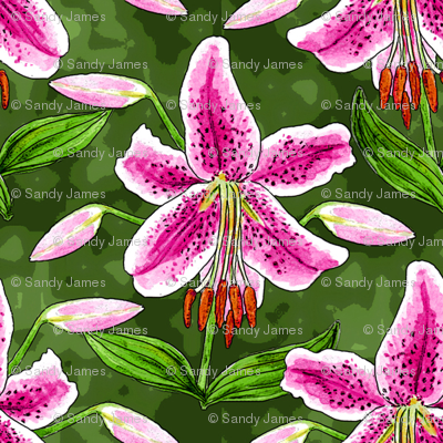 stargazer_and_buds_watercolor_4