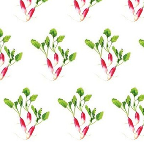Pink Red Radishes with Green Leaves on a White Background