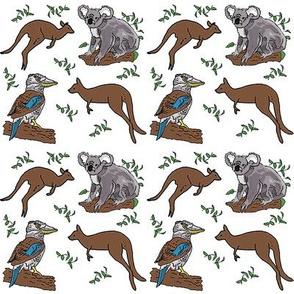 kangaroo_koala_kookaburra_27