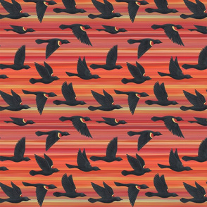red winged blackbirds on orange