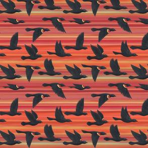 red winged blackbirds on orange