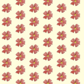 Coral_Flower_Cream