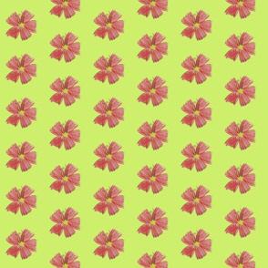 Coral_Flower_Sage