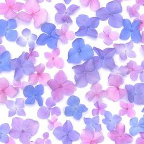 pastel party hydrangea