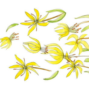 Avalanche Lily/Erythronium