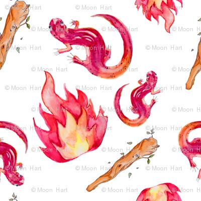 Wands, flames and salamanders