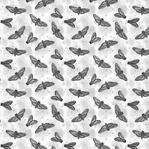 Moth Balls Grey