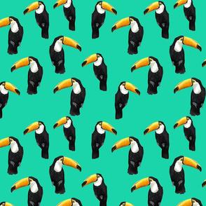 Toucan Party on Dark Mint
