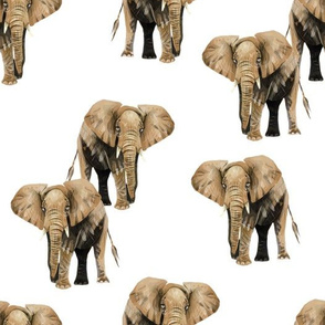 Elephants on White
