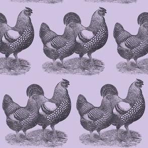 Victorian Etching Wyandotte Chickens