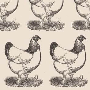 Victorian Etching White Hen