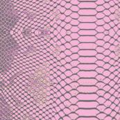 Lavender Python