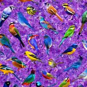 Brilliant Birds 2 - Violet Blossoms background