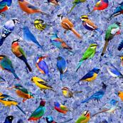 Brilliant Birds 2 (Blueish bg)