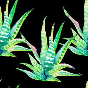 """8"""" Cactus Crazy Black"""