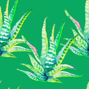 "8"" Cactus Crazy Green"