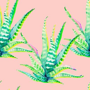 "8"" Cactus Crazy Pink"