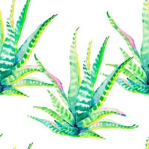 """8"""" Cactus Crazy White"""