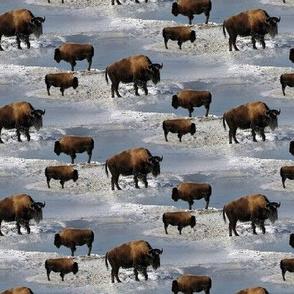 buffalos in winter