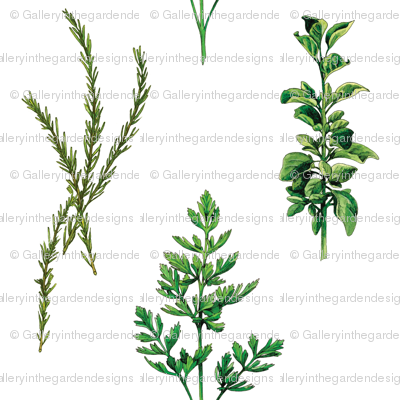 Parsley, Rosemary and Basil Ktichen Garden Herbs