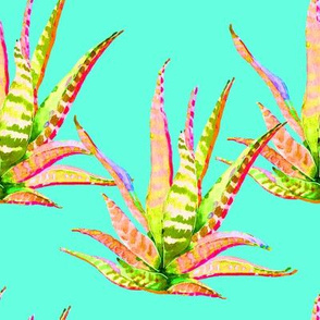"""8"""" Pink Cactus Crazy Aqua"""