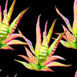 """8"""" Pink Cactus Crazy Black"""
