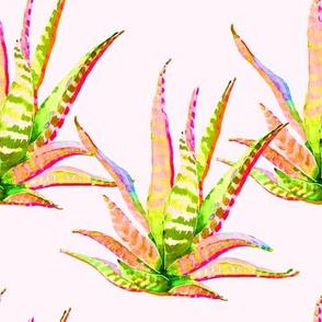 "8"" Pink Cactus Crazy Blush"