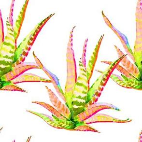 """8"""" Pink Cactus Crazy White"""