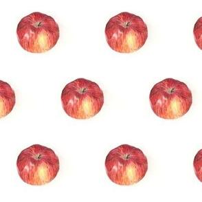 an apple is an apple is an apple