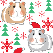 guinea-pigs-with-santa-hats