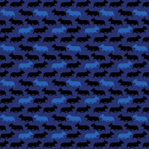 Small Blue camo Pembrokes