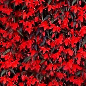 Burning Ivy