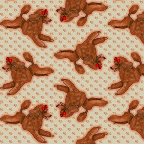 Red Toy Poodle on Pawprints