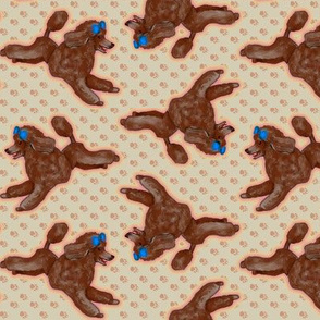 Brown Toy Poodle on Pawprints
