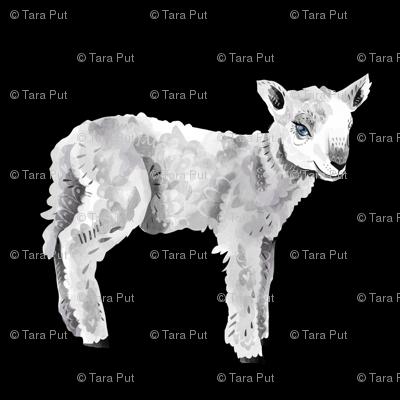 Lambs on Black