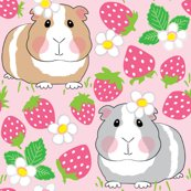 Rguinea-pigs-in-a-strawberry-patch_shop_thumb