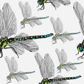 Green Darner Dragonflies Faded