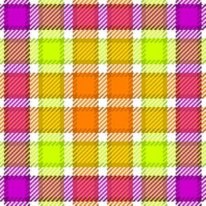 06622555 : tartan : market day