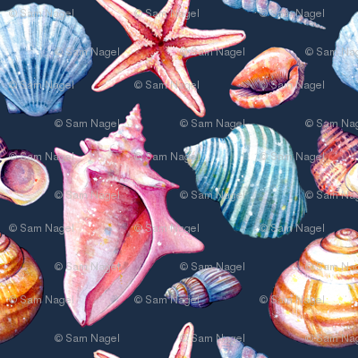 Seashells - colorful dark