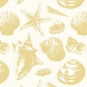 Seashells - Sand