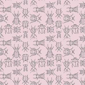 Beetles (Primrose Pink) - hand-drawn illustration bug insect biology animal scarab botanical jungle