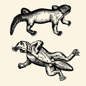 Crocodile and Beaver