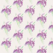 Rdelicate_in_purple_large_shop_thumb