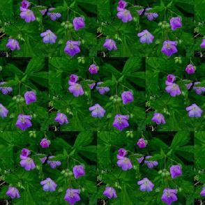 purple_wildflowers__-Presidentials