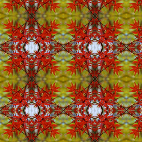 Maple Leaves Mandala 8098