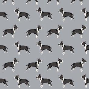 Bull Terrier standing grey