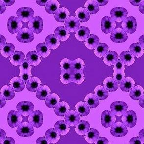 Purple Fractal Impatiens
